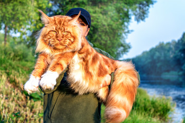 A girl holding in arms a gigantic maine coon cat in forest in summer.