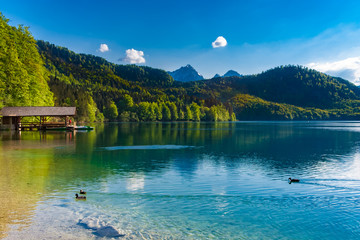 Lovely landscape view of the Alpsee lake with swimming ducks & a wooden boat shed surrounded by a forest with the Alps in the background under a blue sky in the Ostallgäu district of Bavaria, Germany.