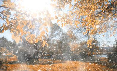 Autumn park in the first snow
