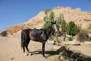 Photo sur Aluminium Vache Horse as one of the ways to climb the hill to the ruins of the Zoroastrian temple of fire, Atashha, Isfahan, Iran