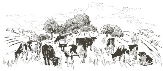 landscape with flock of cows, calves, field