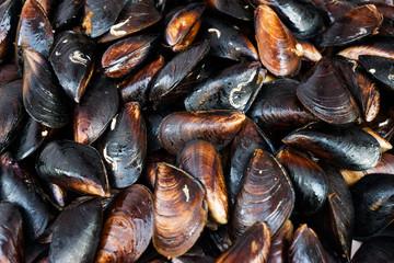 Fresh live mussel stuck fast on breakwaters by the seashore