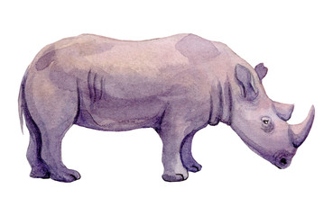 Watercolor illustration of a standing rhino on a white background. Painting of an endangered animal - African Rhinoceros