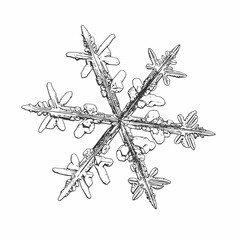 Snowflake isolated on white background. Vector illustration based on macro photo of real snow crystal: elegant stellar dendrite with hexagonal symmetry, ornate shape and complex inner details.