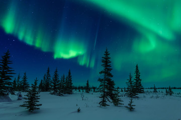 Fototapete - Aurora Borealis And Trees
