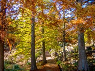 【静岡県伊豆市】秋の公園の遊歩道【修善寺虹の郷】