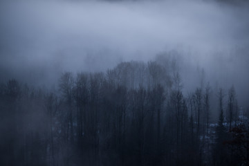 Valley Forest in the Fog - Valley Old-Growth