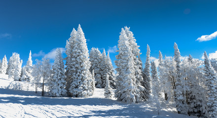 winter mountain landscape with snowy trees and snow