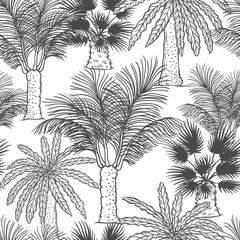 Vector seamless pattern of palmtrees. Different black white kinds of tropical palm contour sketch background monochrome isolated on white background.