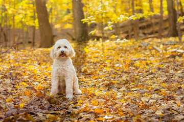 Cute smiling dog sitting in forest during fall