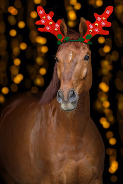 Chestnut horse portrait with christmas decoration on bokeh background
