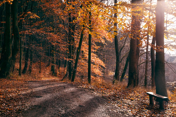 Bench  and path in a golden autumn forest. Sunrise  in a forest. Stunning landscape with autumn forest sunrise.