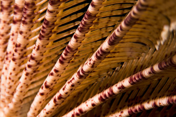 Close-up of a Feather Star