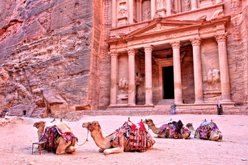 The Treasury (Al Khazneh) of Petra Ancient City with Camel, Jordan