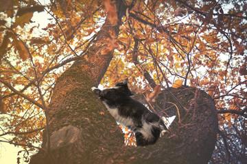 Domestic cat sitting on tree branch