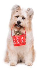Dog holds a basket with a kitten in it's mouth isolated on white background