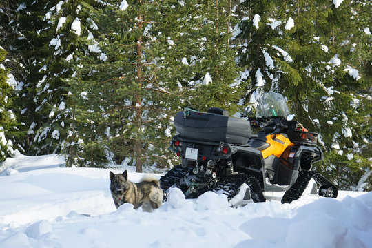 A snowmobile and a dog are in the snowy winter forest.