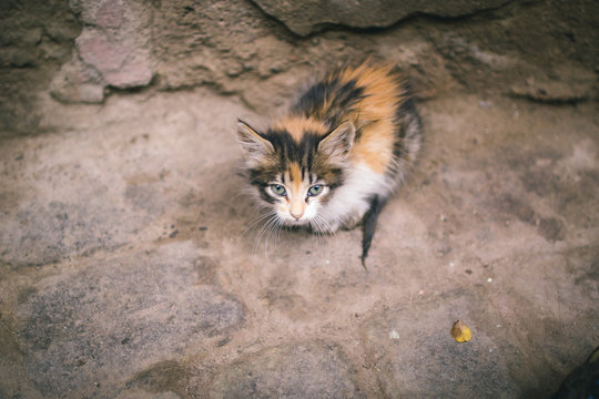 Stray Kitten In Marrakech Medina