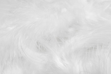 White feathers on white background for design