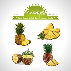 Pineapple. Hand drawn collection of vector sketch detailed fresh fruits. Isolated