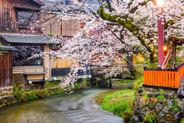 Kyoto, Japan along Shirakawa Dori Street in the spring season.