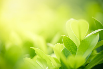 Photo sur Aluminium Spa Closeup nature view of green leaf on blurred greenery background in garden with copy space using as background natural green plants landscape, ecology, clean fresh wallpaper concept.