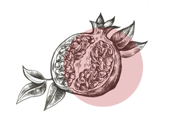 pomegranate hand drawn fruit illustration