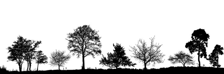 Realistic trees silhouette. Vector set of natural trees. (Vector illustration).Ai10