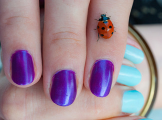 ladybird on woman hand with purple and blue painted nails