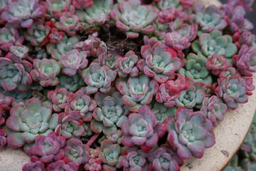 Beautiful succulent cactus garden various flowers in botanic garden in springtime