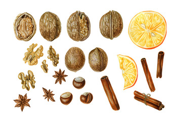 Set of spices for mulled wine. Walnuts, hazelnuts, anise stars,cinnamon sticks and orange slices, isolated on white background. Watercolor illustration.