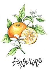 tangerine Hand drawn fruit