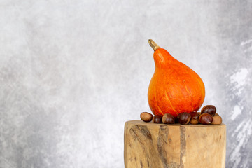 Squash butternut gourd with chestnut on a tree trunk tree on texture background