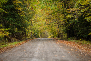 Autum road