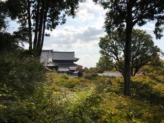 林からの京都の眺め