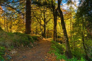 A footpath through autumnal broadleaf woodland in Moray, Scotland. 20 October 2018