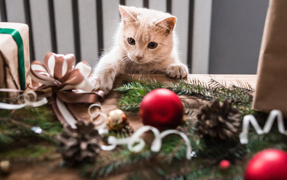 Kitten playing with christmas toys.