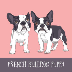 Cartoon French Bulldog Puppies on a pink background. Vector illustration.
