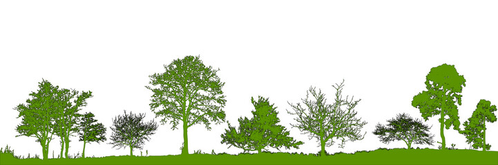 Realistic trees silhouette. Vector set of natural trees. (Vector illustration).