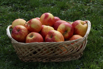 Autumn still life with beautiful ripe apples