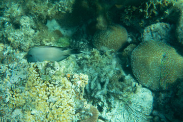 Underwater world landscape coral reef fishes wildlife marine life