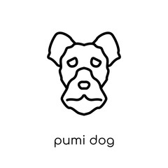 Pumi dog icon. Trendy modern flat linear vector Pumi dog icon on white background from thin line dogs collection
