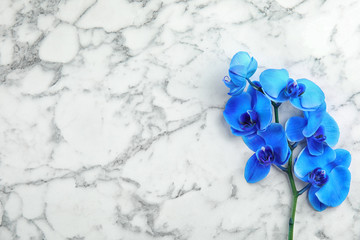 Branch with beautiful tropical orchid flowers on marble background, top view. Space for text