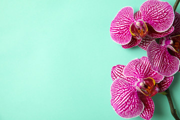 Tuinposter Orchidee Branch with beautiful tropical orchid flowers on color background, top view. Space for text
