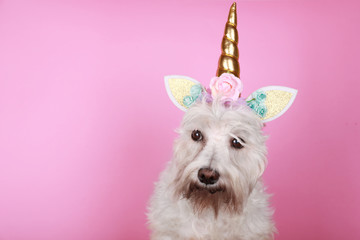 unicorn little white dog on pink background with copy space