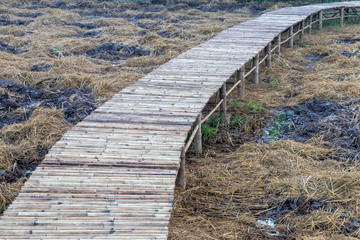 Bamboo bridge stretches over dry rice fields.