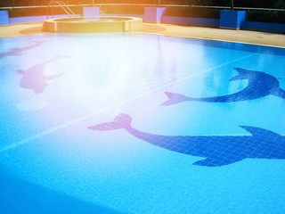 swimming pool tiles / dolphin pattern on swimming pool water blue surface Wall mural
