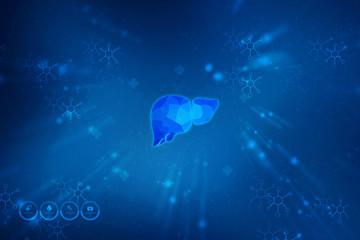 Realistic human liver 2d illustration