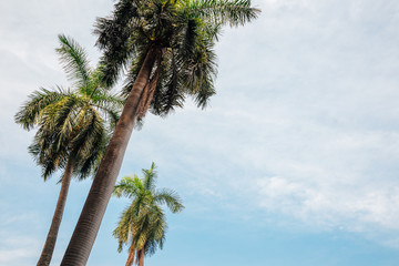 Palm trees with blue sky at Chhatrapati Shivaji Maharaj Vastu Sangrahalaya (Prince of Wales Museum) in Mumbai, India