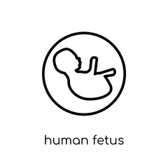 Human Fetus icon. Trendy modern flat linear vector Human Fetus icon on white background from thin line Human Body Parts collection